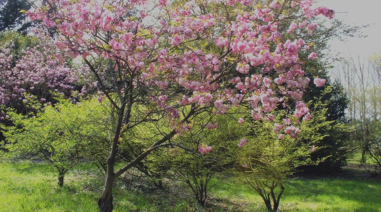 Arboretum de Châtillon-sur-chalaronne